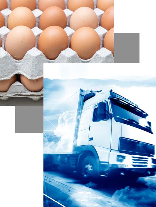 eierschachteln versandhandel